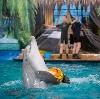 Дельфинарии, океанариумы в Алексеевке