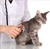 Ветеринарные клиники в Алексеевке